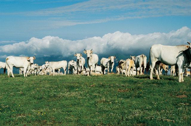 "Az. Agricola ""Moggiano"" – Arezzo"