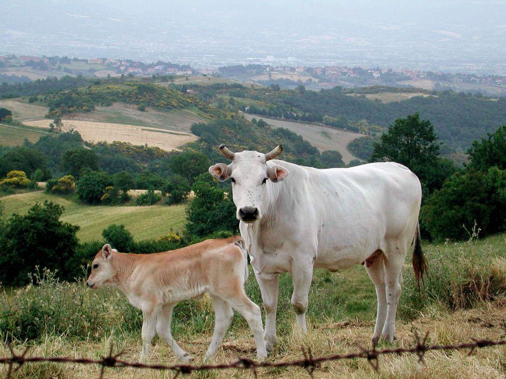 Fattoria Morrocco – Firenze